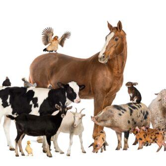 Стратегування в ЄС щодо захисту та добробуту тварин: оцінка зробленого, завдання на майбутнє