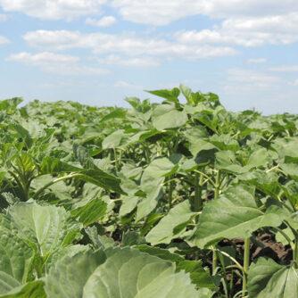 Як сільськогосподарські практики впливають на довкілля та соціальний розвиток