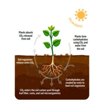 Сarbon farming – новий тип сільського господарства?