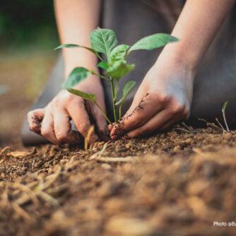 Нова ініціатива ЄС з вуглецевого сільського господарства (carbon farming)