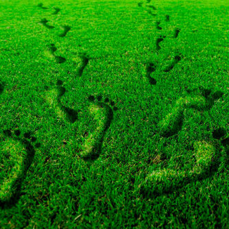 Український зелений шлях від ферми до виделки: органічне виробництво