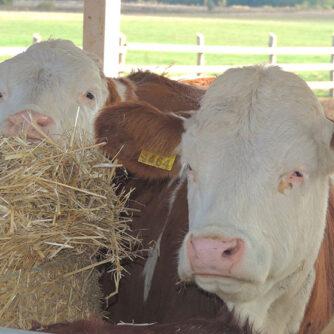 Молоко без корови?