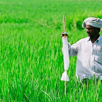 Zero Budget Natural Farming (ZBNF) – Безбюджетне натуральне агровиробництво в Індії