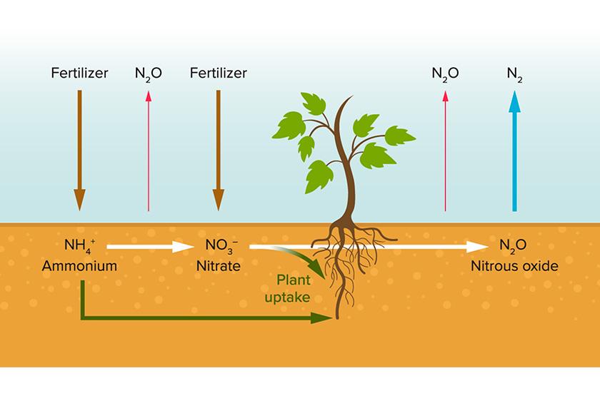 Проблеми від використання мінеральних добрив більші, ніж забруднення води