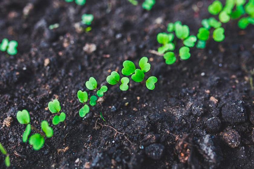 Нові органічні альтернативи хімічним пестицидам