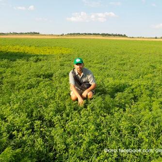 Відновлення природи на приватній ріллі: консервація і ревайлдінг у Донецькому степу