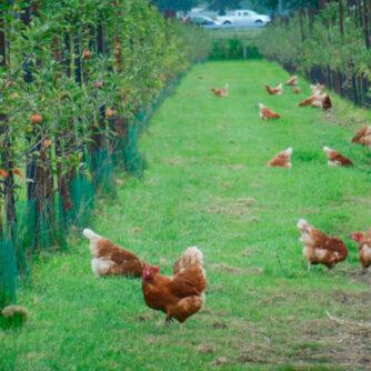 Агролісомеліорація у сільському господарстві